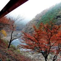 嵯峨野観光鉄道  (トロッコ列車)