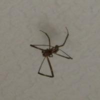 天井の蜘蛛クン♪