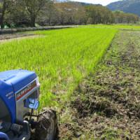 たまねぎ畑の準備  田んぼから畑仕様に速攻チェンジ!