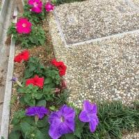 5月の庭。。。その7