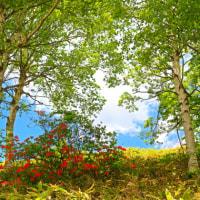 初夏の峰の原高原