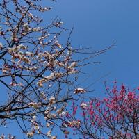 梅ヶ丘に行った日~春二番?