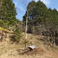 古瓦の移動とヒノキの伐採