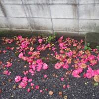 ひきつづき散り花