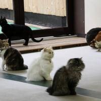 ネコの多頭飼い