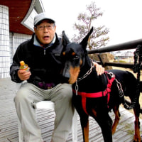 """びわ湖大橋西詰め 道の駅 """" 米プラザ """"でドーベルマンに会いました。"""