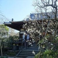 「梅・宝戒寺」/鎌倉(2017初春)