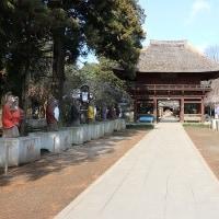 2017年04月02日 茂林寺のシダレザクラを見てきました