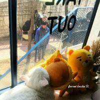 ネコちゃんも応援してる~🐱 クォン・サンウ チェ・ガンヒ『推理の女王』🎥