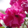 薔薇さんと蜂さん