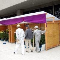 高槻市第49回菊花展が始まります。