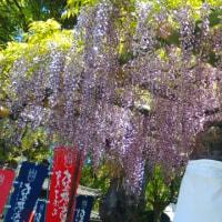 大阪、花めぐり 藤、ツツジ、牡丹、シラン