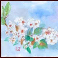 卯の花って、こんな花だったんですんね (卯の花の匂う垣根にーー)