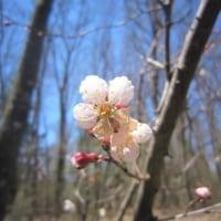4/23(日)のイキメンニュース~追分&軽井沢周辺の情報