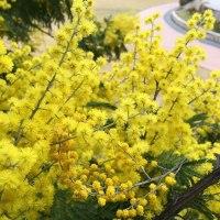 可愛い黄色い花が咲いておりました。春日公園(iphoneにて撮影)