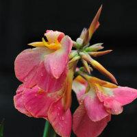 Vol.1983   大堂津で見かけた花々とはまぼう公園 (Photo No.13758)
