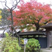 🏠晩秋の鎌倉散策 2016🏠