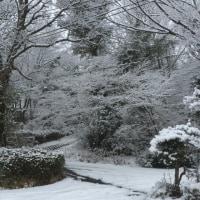 箱根は雪です^_^;