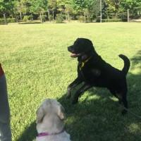 初夏の公園でトレーニングやら遊びやら