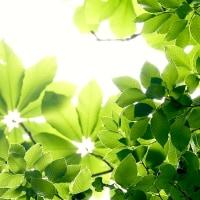 緑の季節(法体の滝付近)