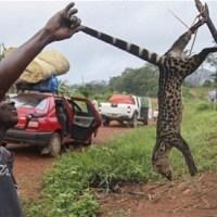 意外や意外、ブッシュミートは都市住民の方が好きだった(エボラ)