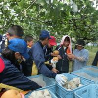 11日午後、「ふるさと先生」で、一年生は梨狩り体験をしました。ご協力ありがとうございました。