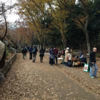 薄陽が射す井の頭公園にて。秋の散策
