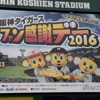 11/19の阪神甲子園球場
