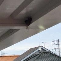つばめの巣が完成