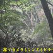 2017/07/28 金剛山 ギンバイソウ