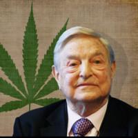 医療用大麻