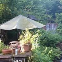 滝の流れる夏のケヤキのお店工房&第2の鳥取大山工房