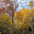 葉っぱの旅