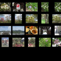 朝のウォーキング 春ですね♫ 堀川~雨宝院、首途八幡宮、北野天満宮、平野神社、地蔵院