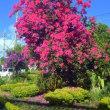 沖縄県季節の花便り ☆うるま市田場の見事なブーゲンビリア