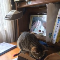 勉強する猫?