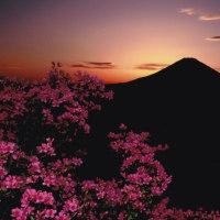 富士山 私のフィルム作品から...   №1