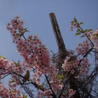 庭の花と散歩道の花々