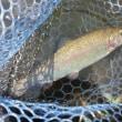 6月15日 Fish On王禅寺