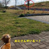 公園行ってきたよ☆