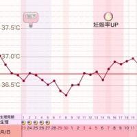 D37 高温期22日目
