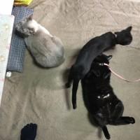 寒さが戻ってきた朝の猫たち