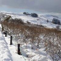 雪の車山肩をスノーシューで楽しむ。