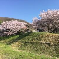 今年の桜は長く楽しめそう