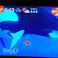 4/25 アメリカ シャチの子が生まれる