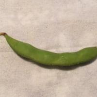 「幸福の四粒の枝豆」発見!