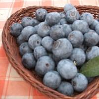 大鍋で作るブルーベリージャムと試食会・夏野菜の畑散策