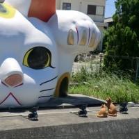 焼き物、招き猫の常滑の街並み散策