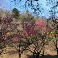 高尾山、小仏城山3月22日(水)
