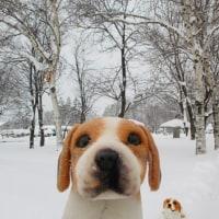 おおゆきドカ雪
